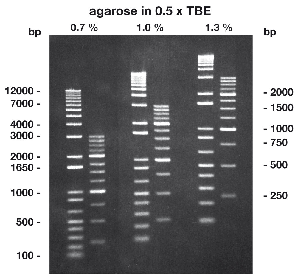 Agarose Low Melt, 100 g