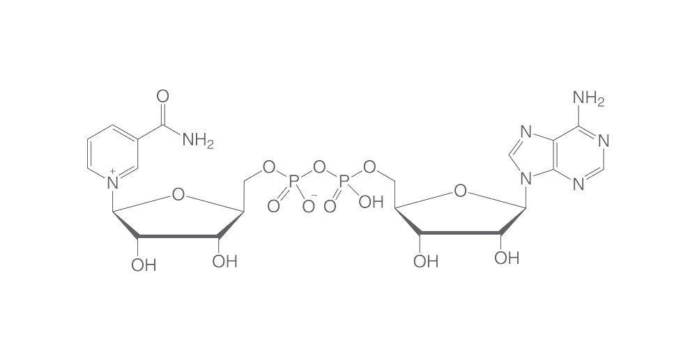 NAD, 1 g | A to Z | Chemikalien | Carl Roth - International