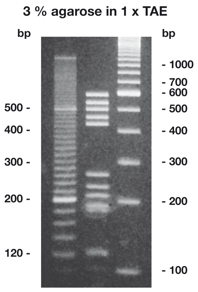 Agarose High Resolution, 10 g