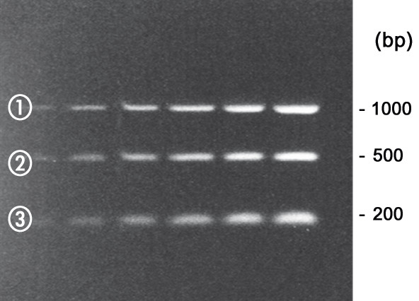 DNA-quantifying marker QSK 200