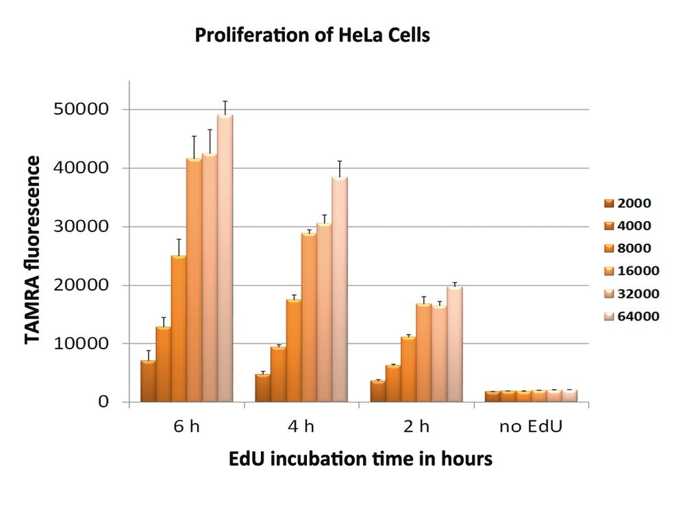 Proliferation_HeLa