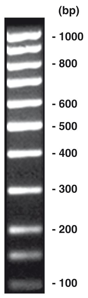 100 bp-DNA-Ladder <I>equimolar</I>, 50 µg, 1 x 50 µg