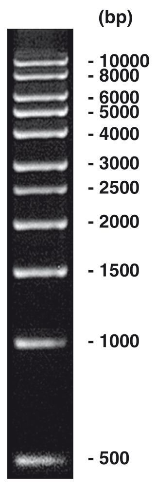 1 kbp DNA-Ladder, 200 µg